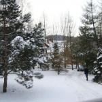 Ogród zimową porą